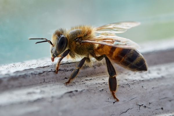 Orange County Bee Removal Service