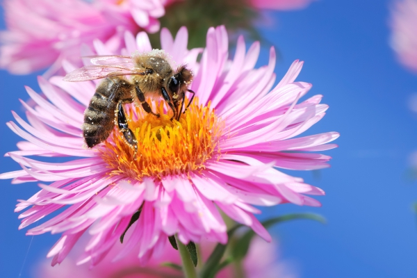 Ontario Bee Removal Services