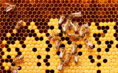 Anaheim Bee Removal Service