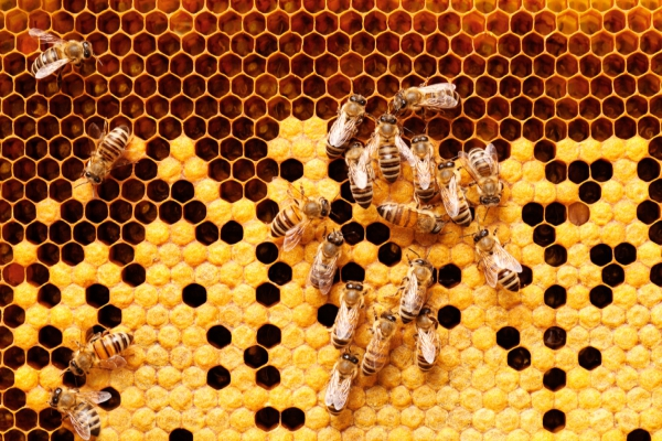 Anaheim Bee Removal Service-- Get bees safely removed from your location. Do not kill, but simply give us a call today!