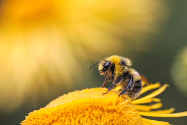 Beekeepers Removal Services