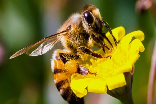 Rescue Remove Relocate Bee Services