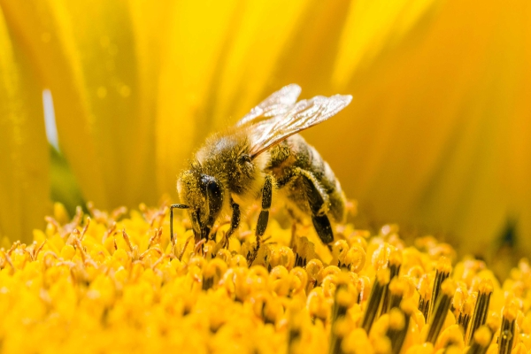 Relocating Means Saving Bees