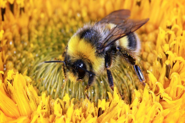 Save Bees, You Save The Environment