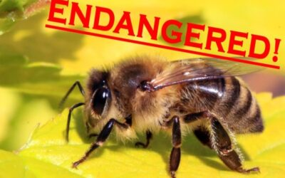 Stop The Near Extinction
