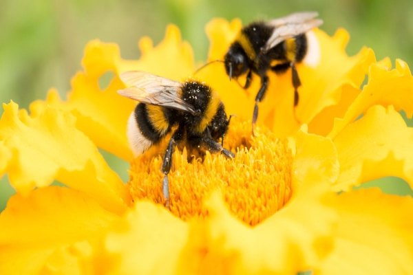Spring Season Bee Removal