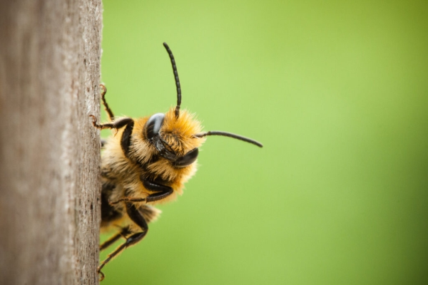 Bee Informed About Us Bees