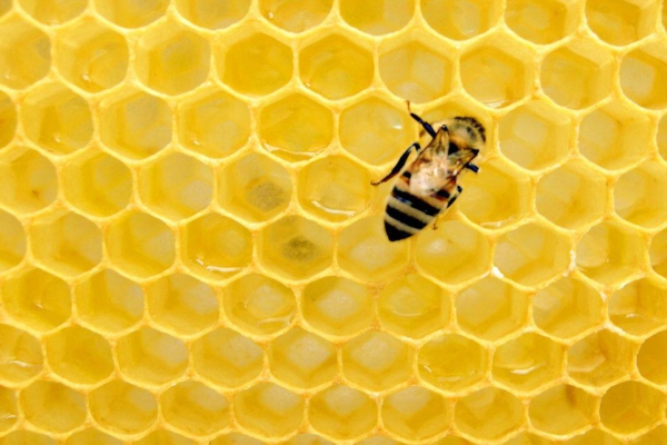Expert Bee Removal Company