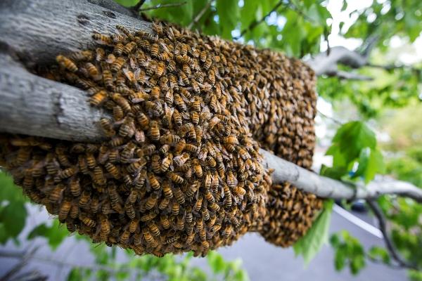 Bee Removal Calimesa