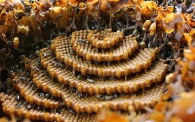 Live Bee Removal Yucaipa