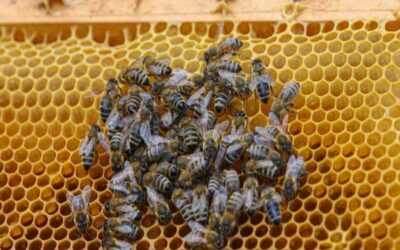 Bee Removal Cabazon