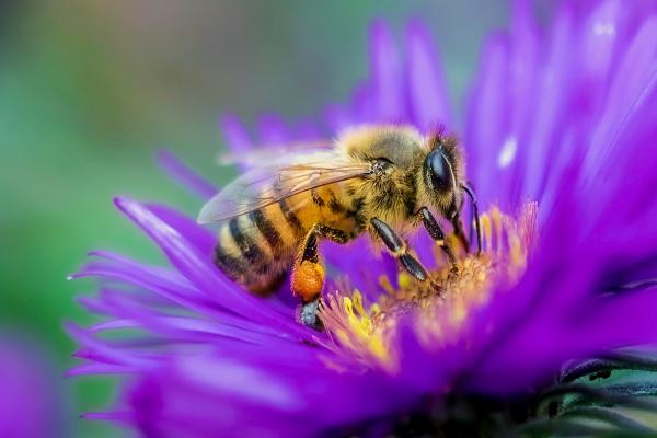 Live Bee Removal San Jacinto