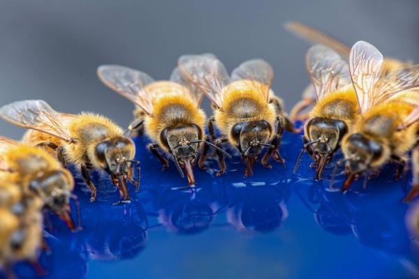 Bee Removal Hemet