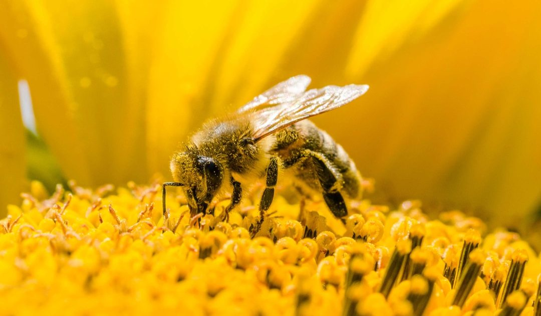 Live Bee Removal Perris-- give us a call and let's start saving bees! We provide effective bee removal service for a low cost to you!