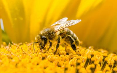 Live Bee Removal Perris